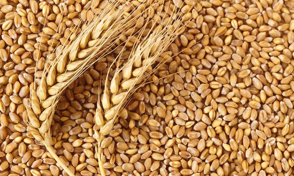 wheat sacks - 900×600
