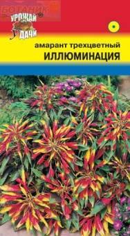 Амаранта цветок иллюминация